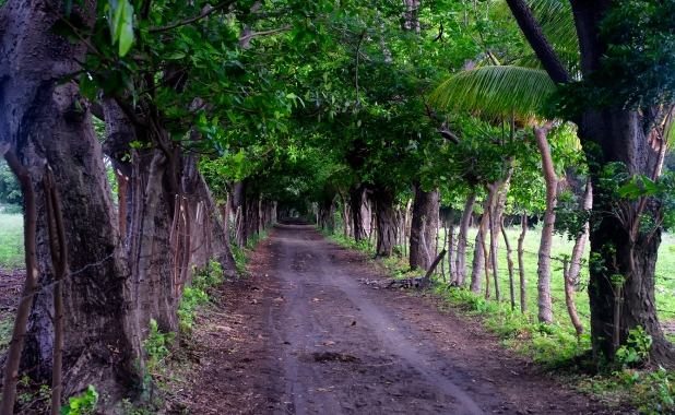 The dirt road avenue to Punta Jesus Maria